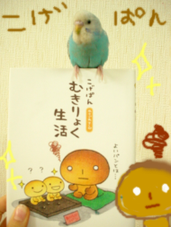 Photo_126