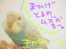 Photo_147
